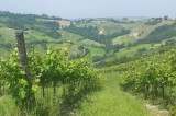 Ancient vineyards and combinations at zero km in Vigna Cunial
