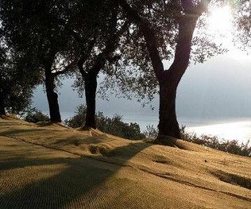 Walking among the olive trees 2019, a trip to the green country