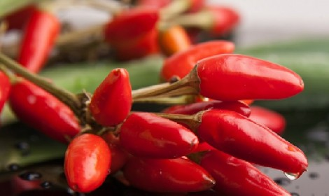 The secret to fighting cold and cellulite? Chilli