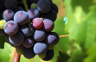 Trinoro and Passopisciaro: from Tuscany to Sicily for successful wines